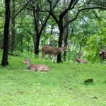 SATMALIA DEER SANCTUARY IN FOREST