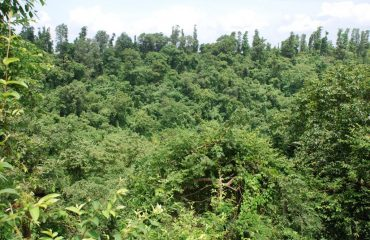 Dudhni forest