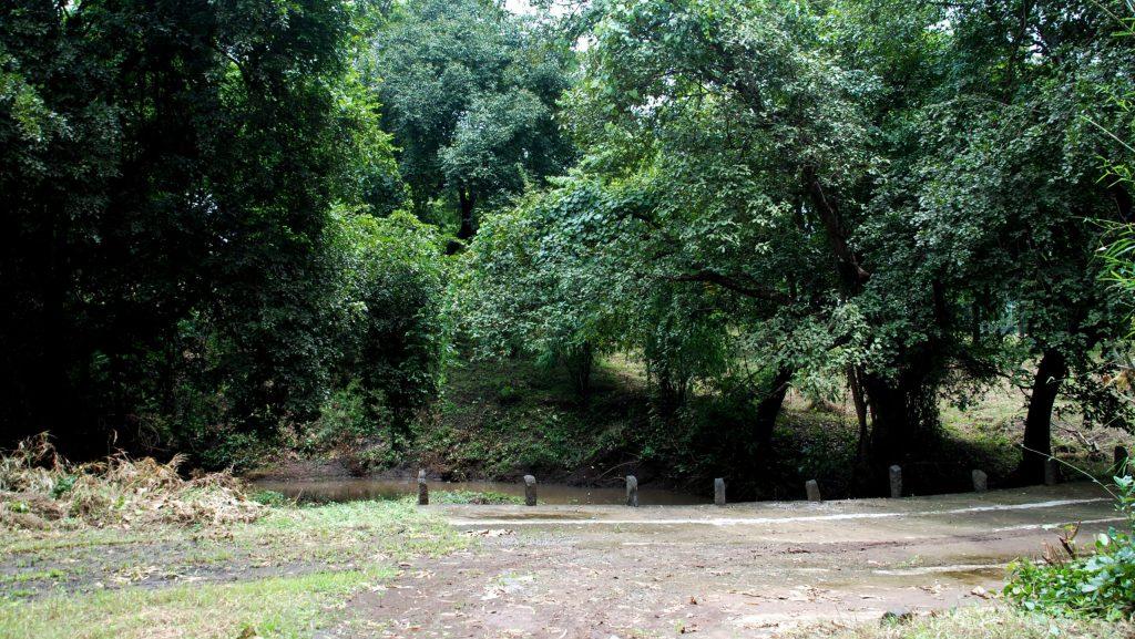 VASONA LION SAFARI FOREST