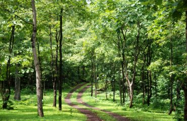 SATMALIA DEER SANCTUARY FOREST