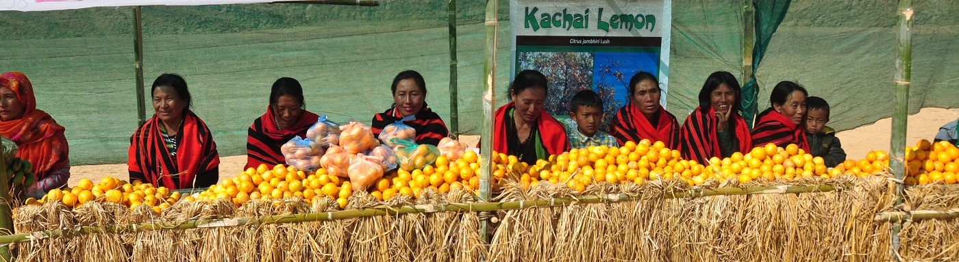A village in Ukhrul district with full of lemons