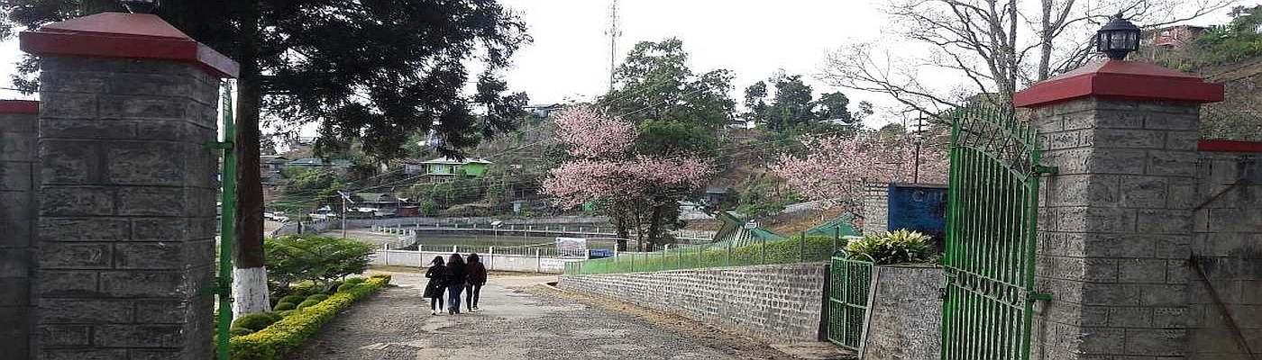 Cherry Blossoms in FAC Campus.