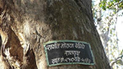 Teak tree in Van Vaibhav