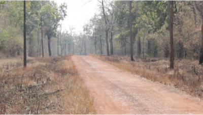 Road in Chaprala Wildlife Sanctuary