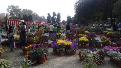 Flowers in Nehru Rose Garden