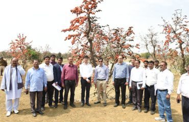Palash Cultivation