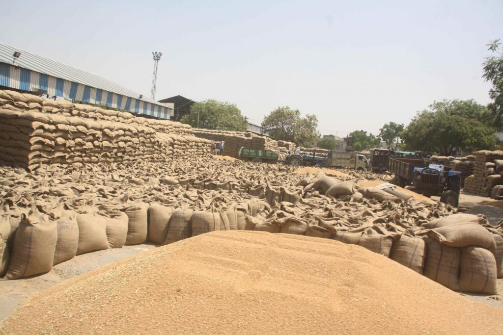 Sharbati Wheat Storage