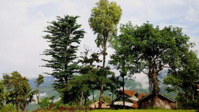 shangnyu village