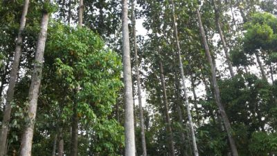 Singphan Forest