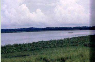 Udhwa Bird Image