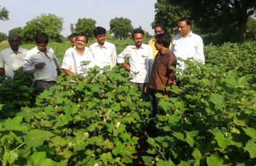 Officers Visiting a Cotton field
