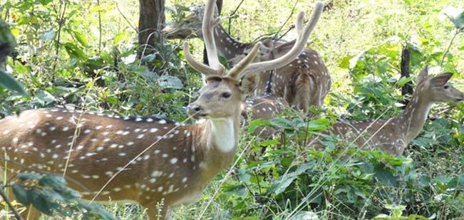 wildlife of national park