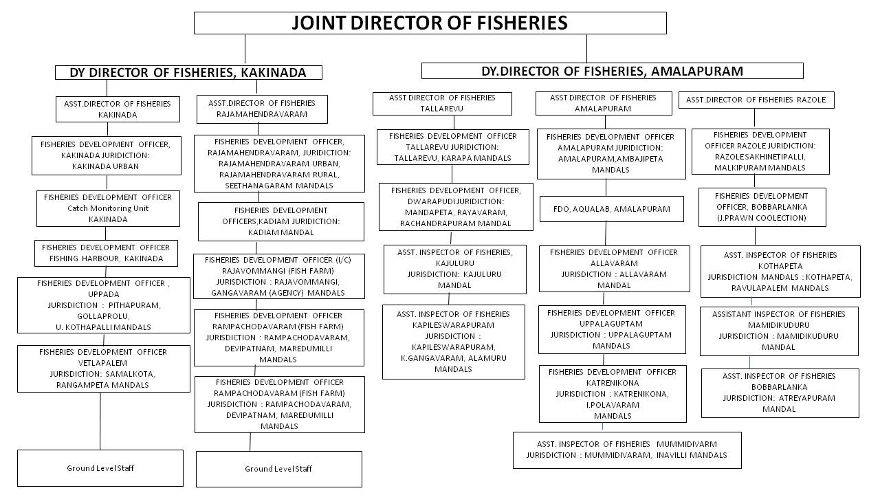 Fisheries Department | Welcome to East Godavari District Web