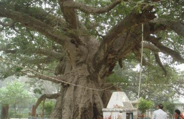 Parijaat-Tree-Trunk-(Other-Side)