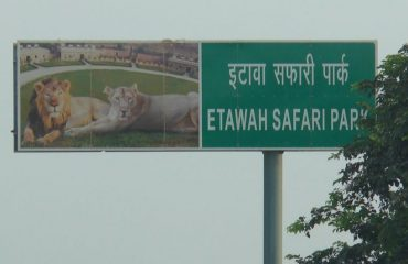 Safari Etawah
