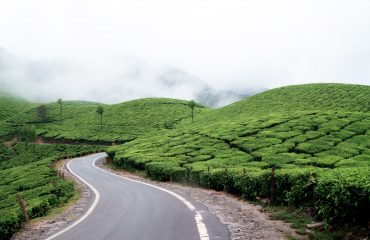 Tea Plantations In Munnar
