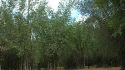 Aiyur Forest