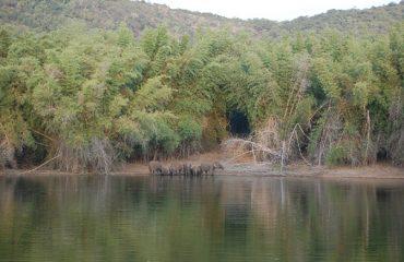 Aiyur Sami Lake With Elephent