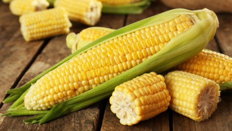 Corn Produce Chhindwara