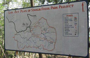 Suketi-Fossil Park