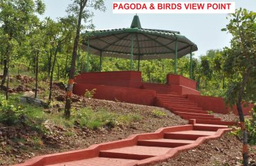 Pagada Birds ViewPoint