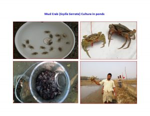 FISHERIES | West Godavari District, Government of Andhra