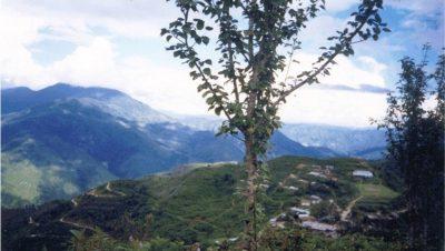 Bameg