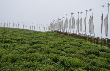 View of Temi Tea Garden