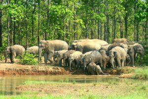 Joypur Forest 1