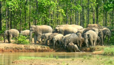 Joypur Forest with elephent view