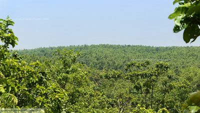 Jhilimili forest overview