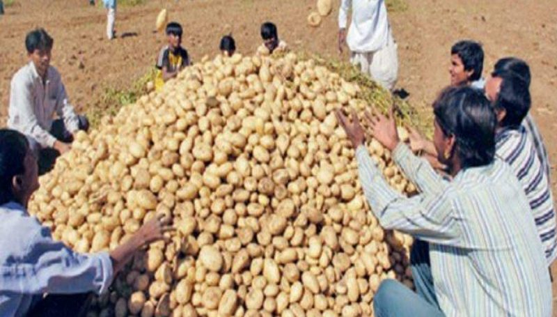 Potatoes-major product of district