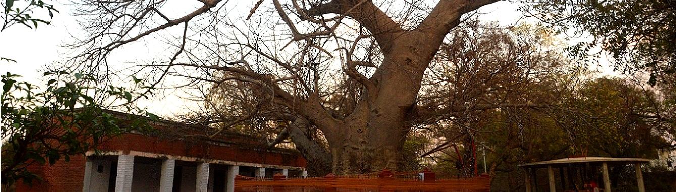 पारिजात वृक्ष सुलतानपुर जनपद में स्थित एक प्राचीन वृक्ष है जिसका धार्मिक महत्त्व है | चित्र में वृक्ष का स्थल प्रदर्शित है जो की जिला उद्योग केंद्र के परिसर में है |