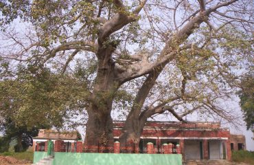 A complete view of Parijat Tree