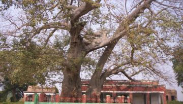 Parijat tree is an ancient tree situated in Sultanpur district with a religious significance. It is located in Civil Lines.