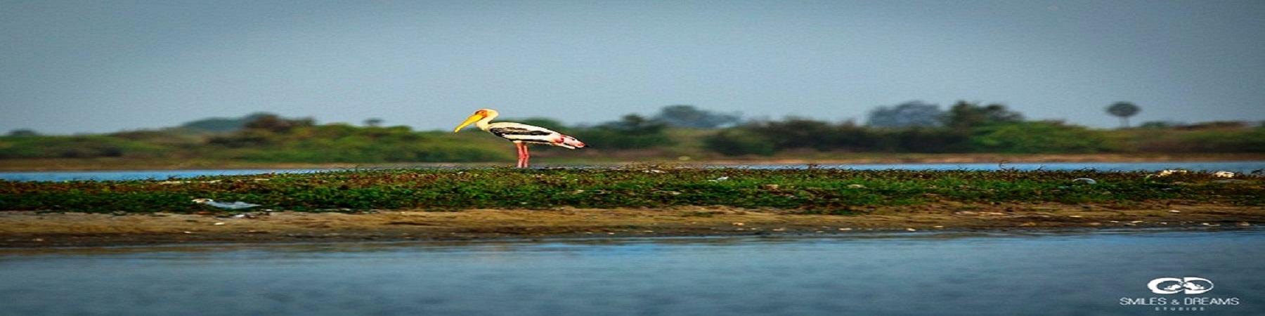 Tiruvallur District | Tamil Nadu | Land of Lakes | India