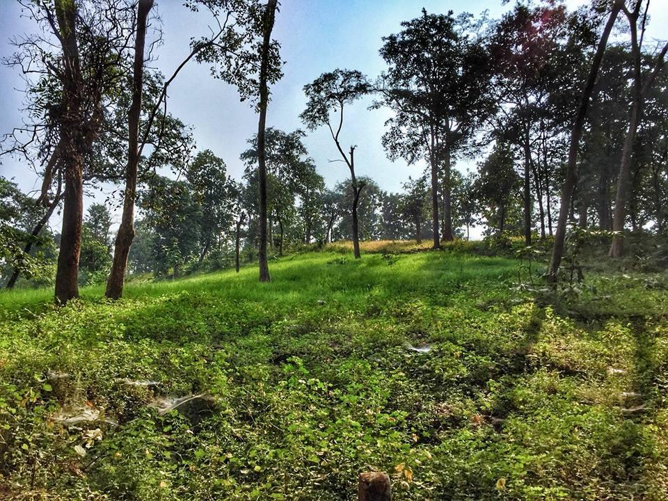 કુદરતી સૌંદર્ય જંગલ