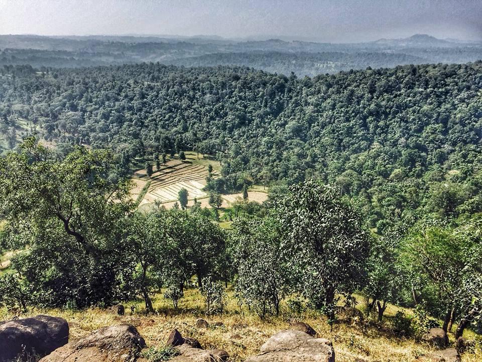 Forest Cover Narmada