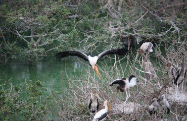 Vedanthangal Bird