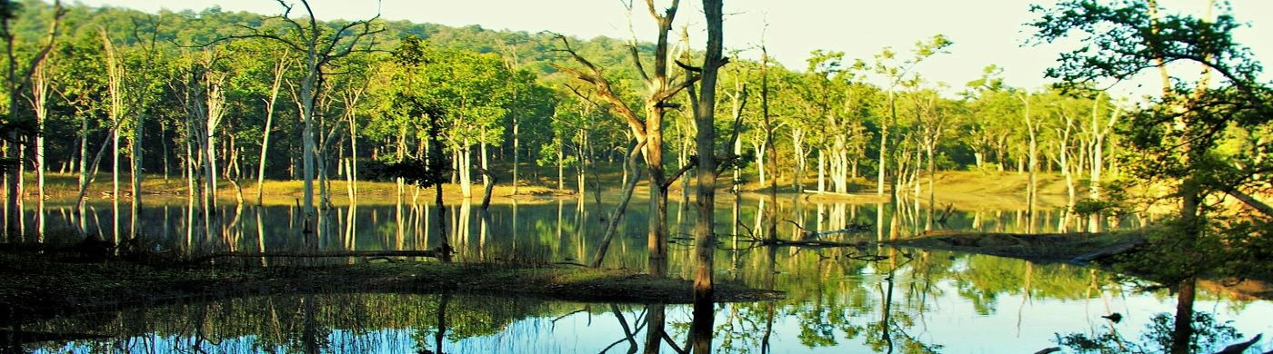 pench forest view