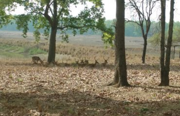 Pench National Park deer