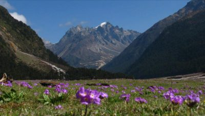 Yumthang Valley in the month of April