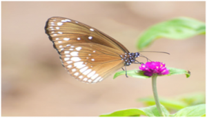 BUTTERFLY live