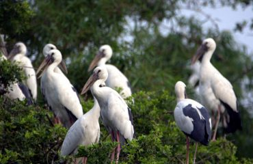 Angina Bird_Sanctuary_Kumarganj
