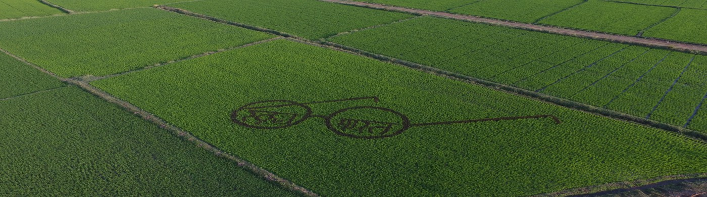 swachh bharat Logo on Paddy Davanagere