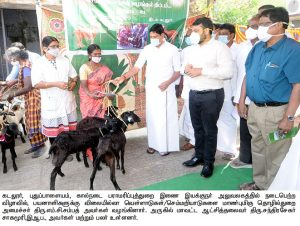 priceless goats to Beneficiaries