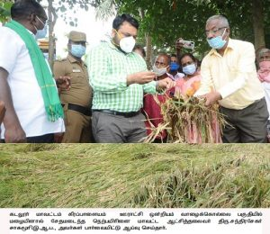 District Collector inspected rain damaged crops in various areas