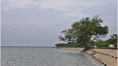 Veeranam Lake bank
