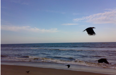 Birds in Samiyarpettai Beach