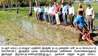Kuruvai Cultivation work